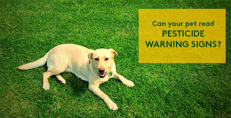 Dog on grass with text: Can your pet read pesticide warning signs?