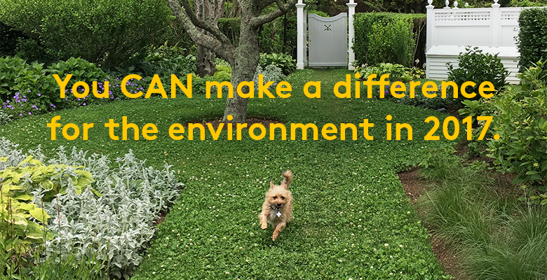 "Dog running across a toxin-free clover lawn with text: ""You can make a difference for the environment in 2017."""